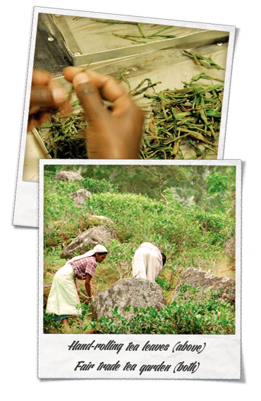 Handmade organic tea and weeding at a fair trade organic tea garden, Certified Organic Tea by Shanti Tea Canada