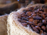 Health: The Mighty Cacao Bean